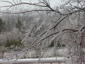 Half Inch Ice on trees in Shawnee Jan 2010