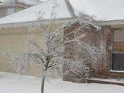 Tree meet Ice, Ice meet Tree!