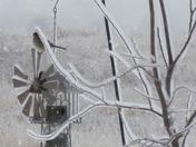 Bird on Icy Birdfeeder