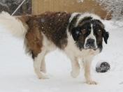 We Lrrrrv SNOW!