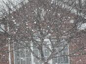Jan 29 snow