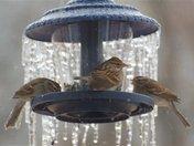 birds on ice.jpg