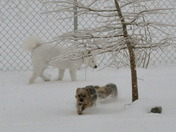 My dogs love the snow