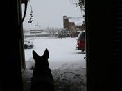 Ice Snow Storm 28-29 Jan 2010 014.jpg