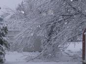 1/29/10 Snow Storm