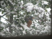 Bird in cover of the snow