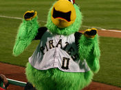 Pittsburgh Pirate Parrot