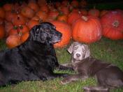 sadie and harley's harvest time