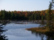 Beaver pond with fall colors