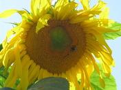 A Bright Fall Flower