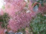 crystals on a smoke tree