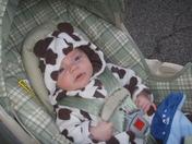 My little cow