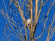 Baseball in Tree