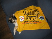Cali and The Terrible Towel