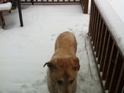 Snow picture!