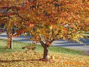Mickey's tree fall 2009
