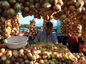 Costa Rican Onion Man