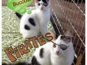 Go Buccos!