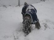 Schultz enjoying the snow