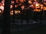 sunset scene thru the trees