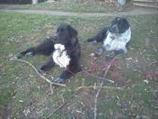 monster puppies