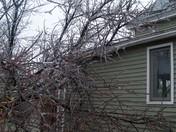 Ice Storm Dover