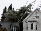 Collapsing Tree