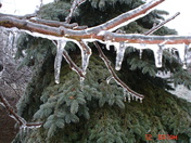 Ice Limb Dec 12 2008