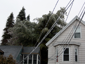 Collapsing Tree Nashua