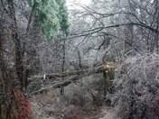Pembroke NH Huge Willow down