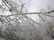 WinterWonderLand 015.JPG