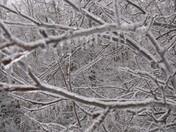 Ice Storm - Frozen Trees