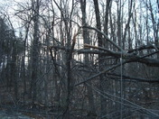 after the storm, downed trees on tolman pnd rd