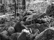 Rock Wall--Ice Storm 2008 Weare, NH