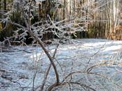 Tree-Ice Storm 2008 Weare, NH