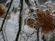 Curved Icicles