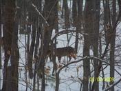 deer 003.jpg