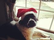 Merry Christmas! Love, Bandit