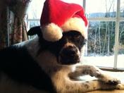 Wishing u a Pawfect Christmas!!