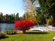 A splash of fall color