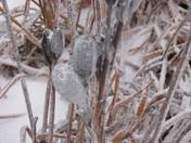 Ice Storm - Frozen Life