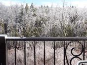 Birch trees suffer in storm