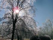 sunset iced tree