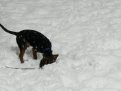 henry playing in the snow