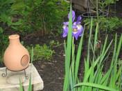 my iris's