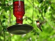 hummingbird in midair