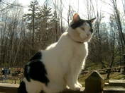 Kayla My Captivating Cat