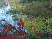Fall Foliage_1