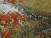 Fall Foliage_2