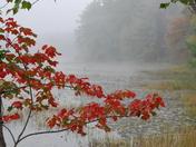 Fall Foliage_3